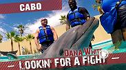 Dana White and Matt Serra visit Cabo San Lucas, Mexico with Din Thomas. They check out a street fair, swim with dolphins, and taste tequila. Then check out some local fights to scout prospects, including a cousin of the Pettis brothers, w/ Donald Cerrone.