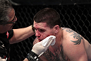 Chris Camozzi