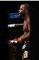 CHICAGO, IL - JANUARY 28:  Rashad Evans stands in the Octagon before his bout against Phil Davis during the UFC on FOX event at United Center on January 28, 2012 in Chicago, Illinois.  (Photo by Nick Laham/Zuffa LLC/Zuffa LLC via Getty Images) *** Local Caption *** Rashad Evans